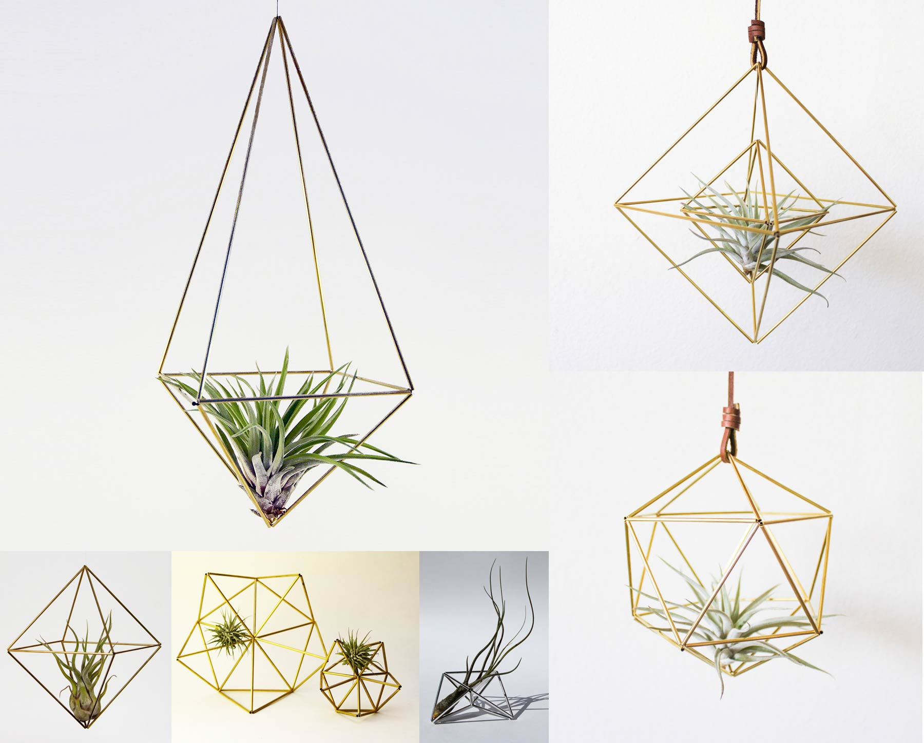 3D geometry made out of metallic bands and a tillandsia plant inside.