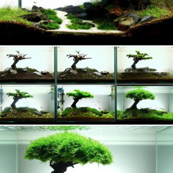 Aquascaping, paysages humides